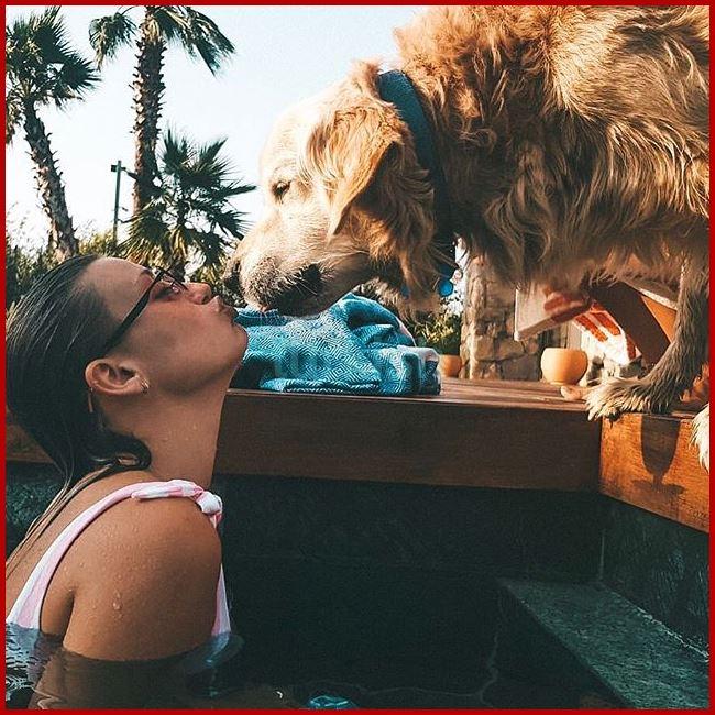تعشق الحيوانات والقطط والكلاب